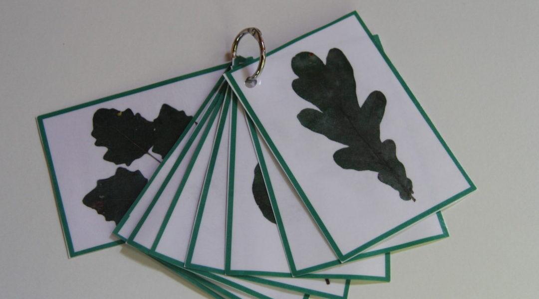 Hogyan készíts tanulókártyát levelekből?